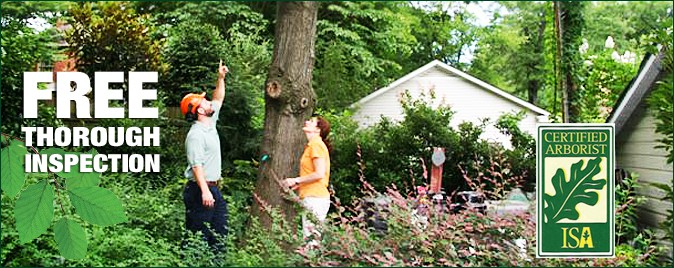 Certified Arborist Service Charlotte, NC