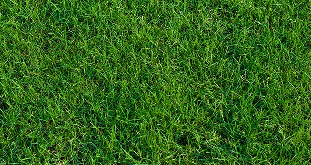 Learn How To Care For A Bermuda Grass Lawn This Winter