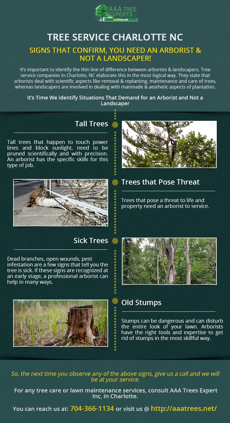 Signs That Confirm, You Need an Arborist & Not a Landscaper!