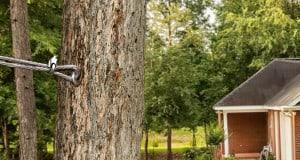 Tree-Cabling-Bracing