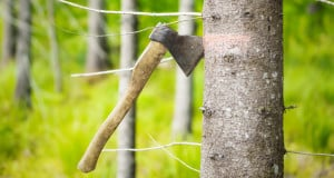 Tree Removal services Charlotte