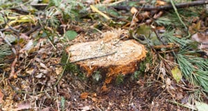 Get Rid Of Tree Stumps
