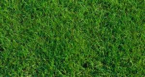 Maintain Grass