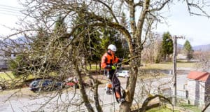 Know why professional tree care is better than a DIY task?