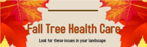 Fall Tree Health Care