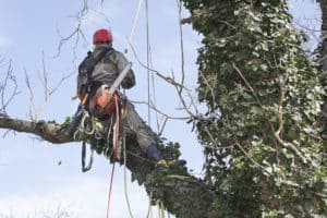Learn about the most frequently asked tree care questions