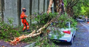 Know When Trees Show Signs for Emergency Care