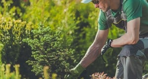 Know How an Arborist is Different from a Gardener